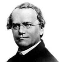 Gregor Mendel,