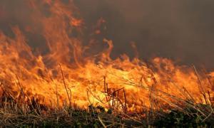 bigstock-Grass-Fire-516231_0